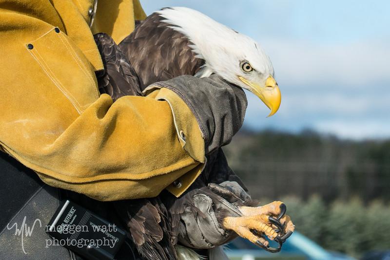 wings of wonder miracle boy eagle release-8915.jpg