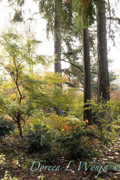 Dietrick fall garden_2114.jpg