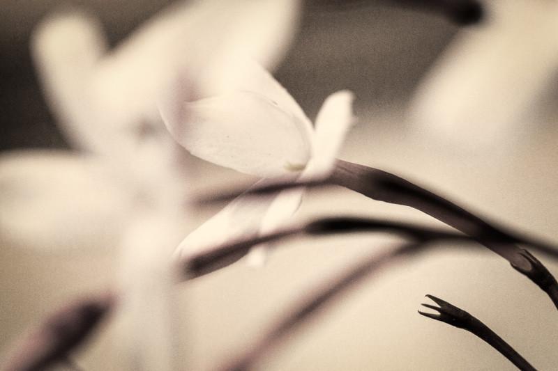 mar 6 - jasmine.jpg