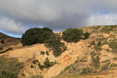 Black oak Cloud Forest
