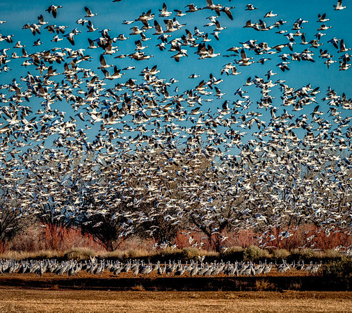 Bosque del Apache & Bernado Wildlife Refuge