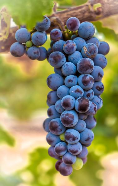 Wine Barn Grapes HDR  (1 of 1).jpg