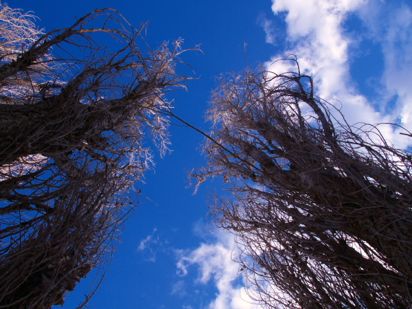 eelect Blue Sky