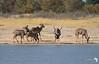 Kudu at the Waterhole
