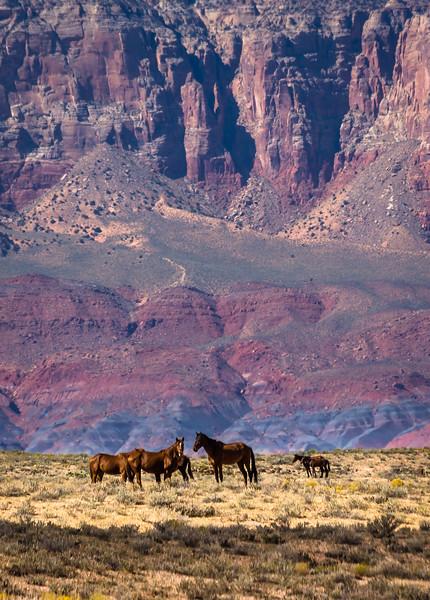 Desert Horses