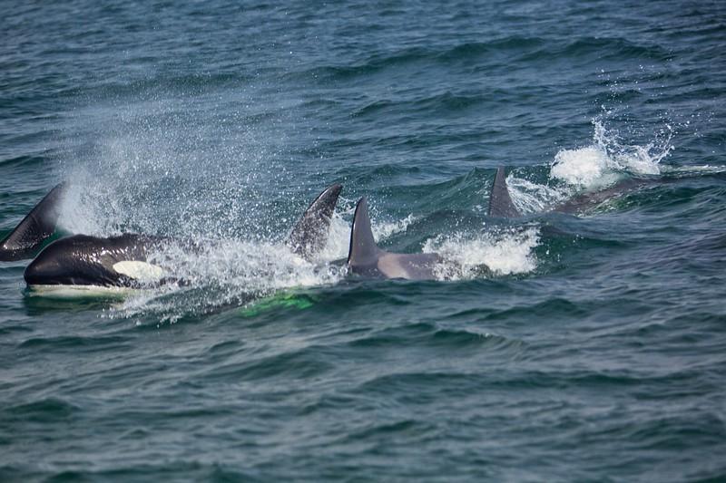 Whale watching off Monterey Coast2017-09-20 (12).jpg