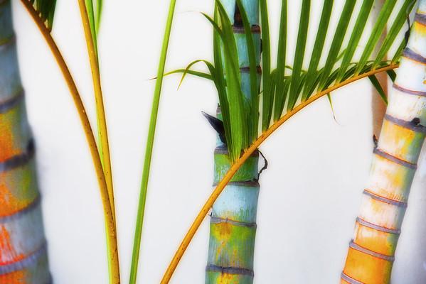 Palm Trunks Nov/Jan 2014