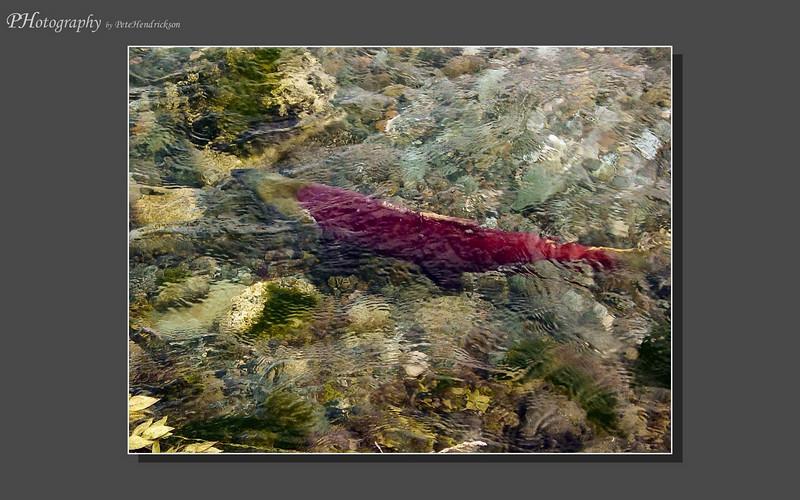 My Alaska 12-08-005.jpg