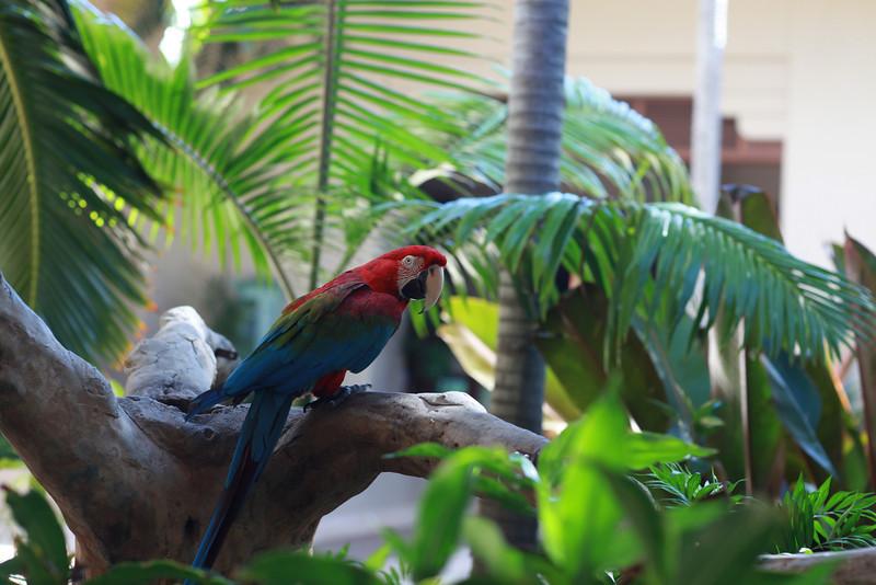 Kauai_D5_AM 185.jpg
