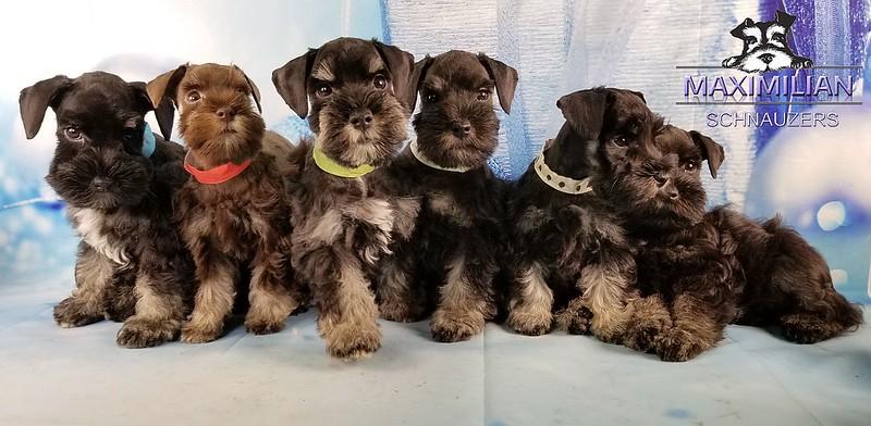 Hettie Pups 022.jpg