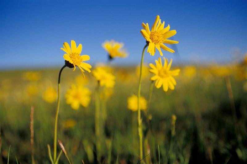 Morning Flowers