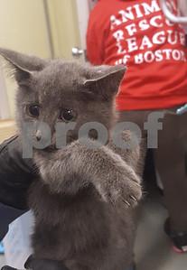 kitten-walking-on-highway-rescued-after-traffic-is-shut-down