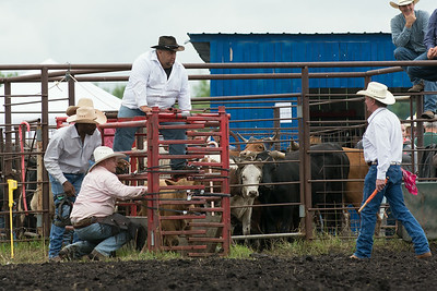 Roping Sunday 2014