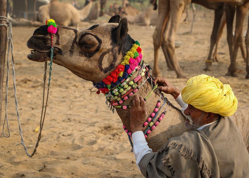 India-Pushkar-2019-8722.jpg