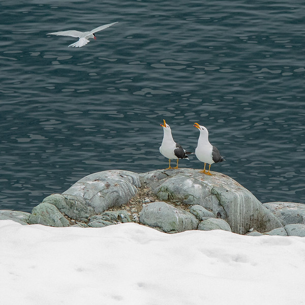 2019_01_Antarktis_05527.jpg
