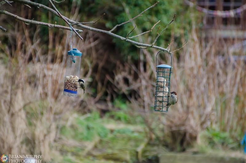 Birds 050218-11.jpg