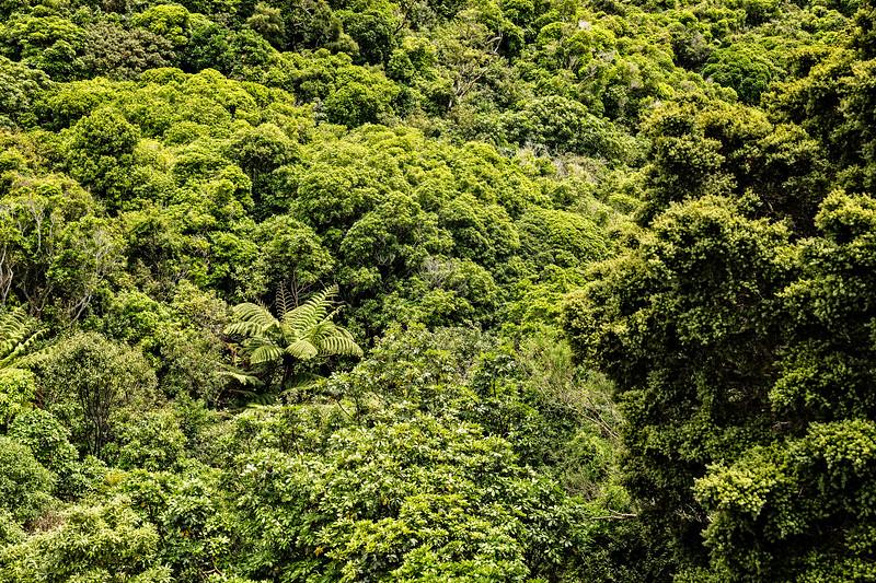 View of vegetation inside Zealandia in Wellington, NZ.