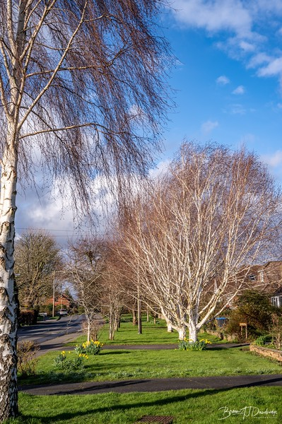 Walk to Oldland Mill-1254.jpg