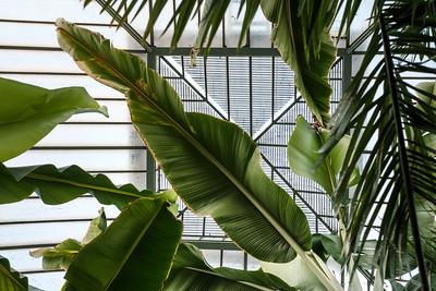 Botanical garden (collection)