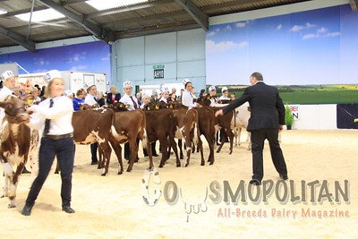 All Britain Colored Calves 15