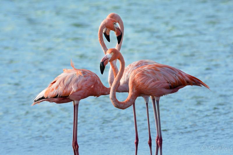 Flamingo consult-.jpg