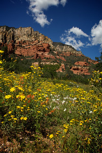 Wildflowers at Slide Rock