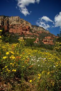 Wildflowers at Slide Rock