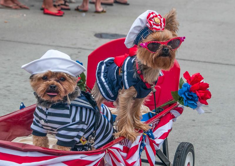 BalIlsleParade_Dogs-3.jpg
