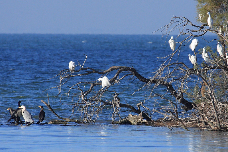 Parc naturel régional de Camargue
