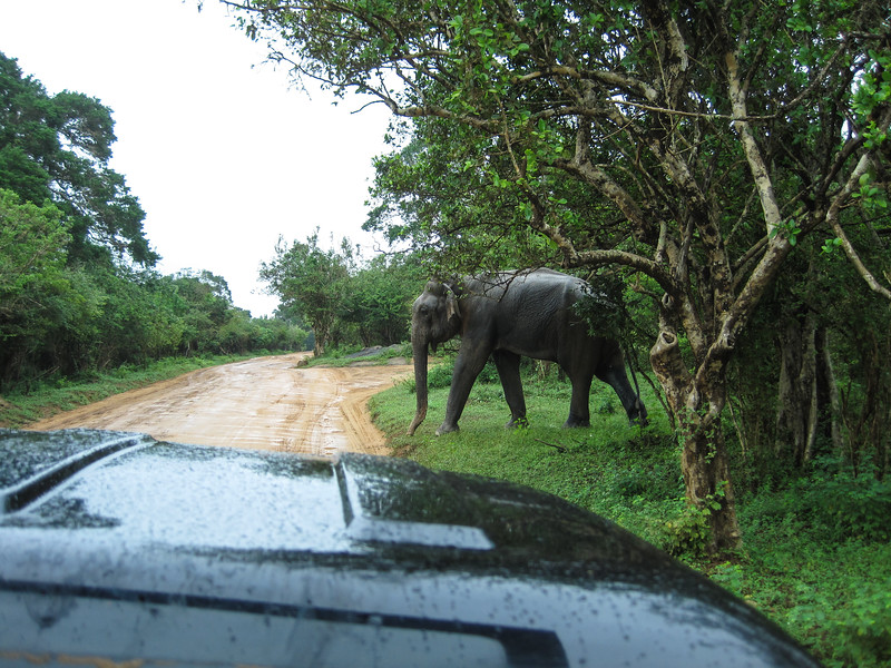 Sri_Lanka17-9625.jpg