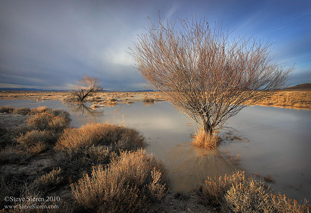 Trees in flooded lowlands in Death Valley