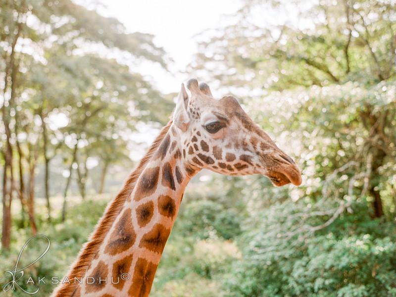 Safari-Africans-120.jpg
