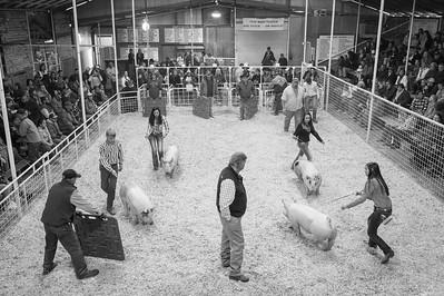 2016 Gerlach Livestock - Swine