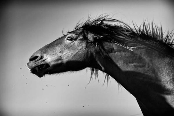 Equestrian Fine Art