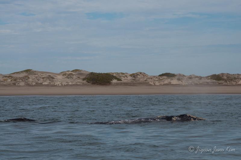 Mexico-Loreto-Whale-2460.jpg