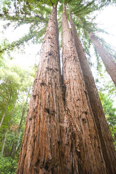 California-108.jpg