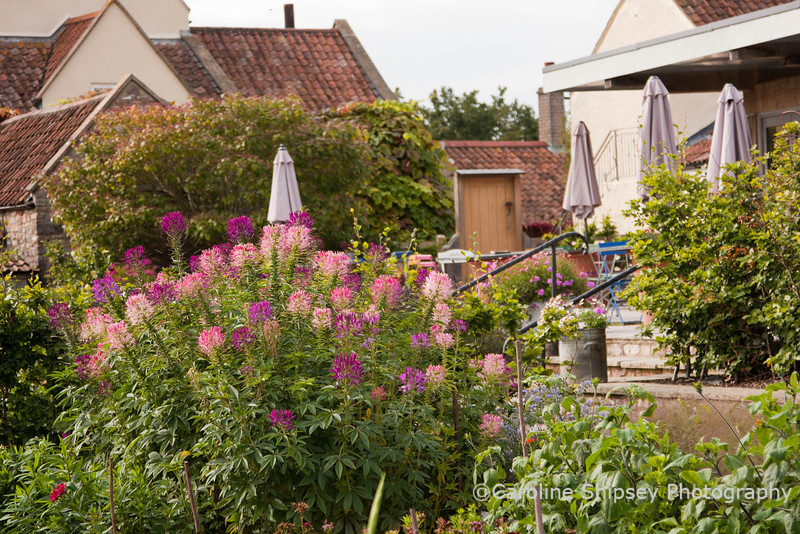 The Organic Gardens,Holt Farm-4915.jpg