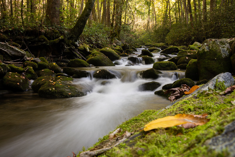 WVWS_Smoky Mountains National Park-8188.jpg
