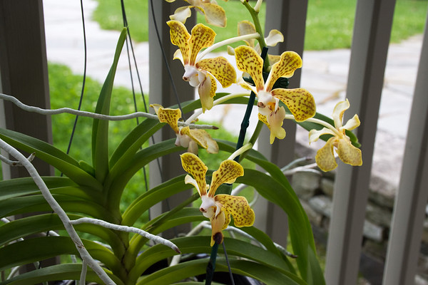 Orchids Presentation, Talk and Tour