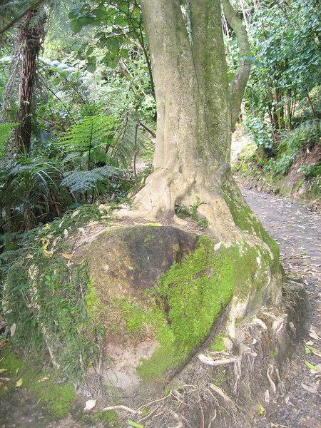 rock_tree.jpg