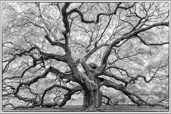 South Carolina - Angel Oak
