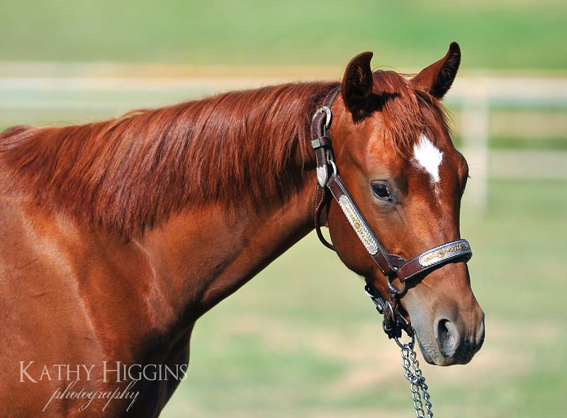 TLC Quarter Horses