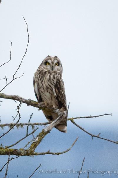 Birds of Skagit Valley