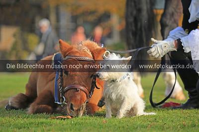 09.11.2018 Pressekonferenz Hund&Pferd Dortmund