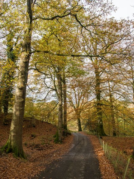 Autumn in the Lake District