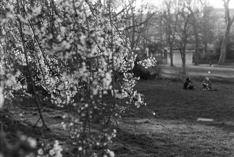 Leica-M4P-Fomapan400-April2018-1 (7).jpg