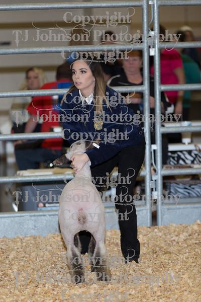 2018 KISD Lamb Show Class 1