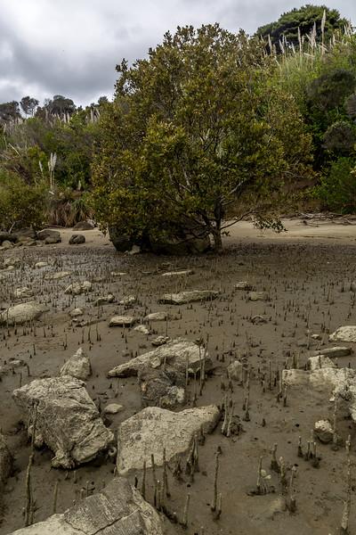 Mangrove bei Ebbe