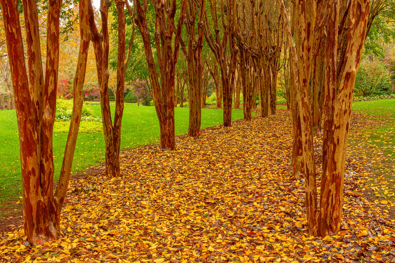 Autumn's Walkway