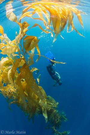 Freediving and Kelp